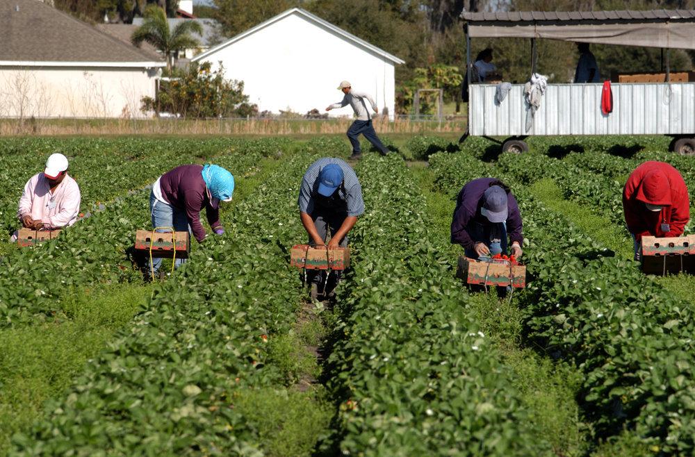 На сезонные работы за рубеж уезжает до 9 млн украинцев