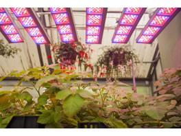 Ученые академии Тимирязева подтверждают эффективность LED