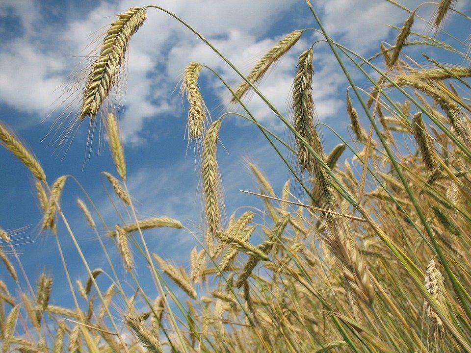 Украинский аграрный экспорт в первой половине 2018 года составил $8,6 млрд