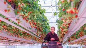 Компания Signify представила новые LED-решения Philips GreenPower на выставке в Эссене