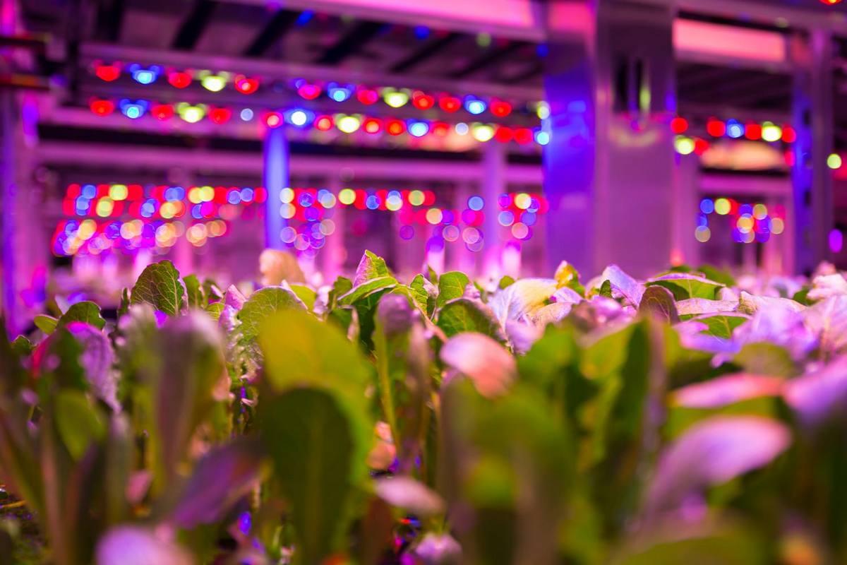 Энергоснабжение вертикальной сити-фермы в Москве